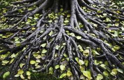 Roots-1024x683.jpg